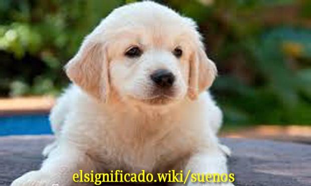 Perros amigables